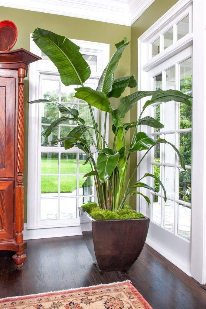 Теневыносливые комнатные растения – создаем уют в темных помещениях