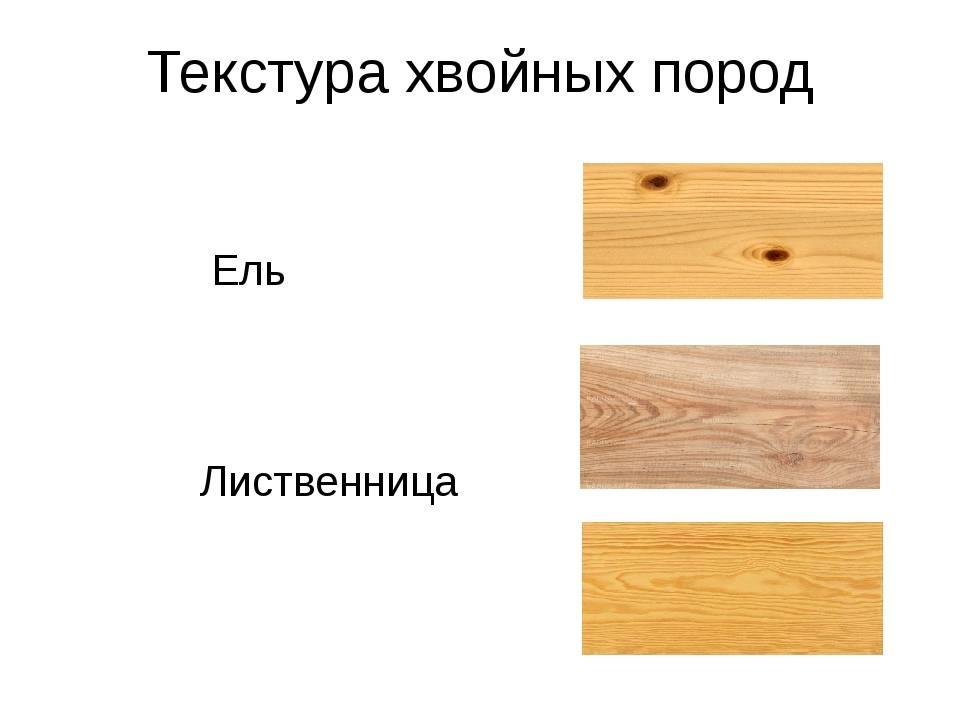 Баня из кедра — выбор древесины