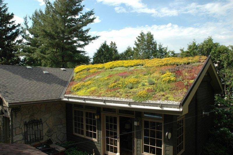 """Озеленение крыши садового дома: правила устройства """"кровельного газона"""""""