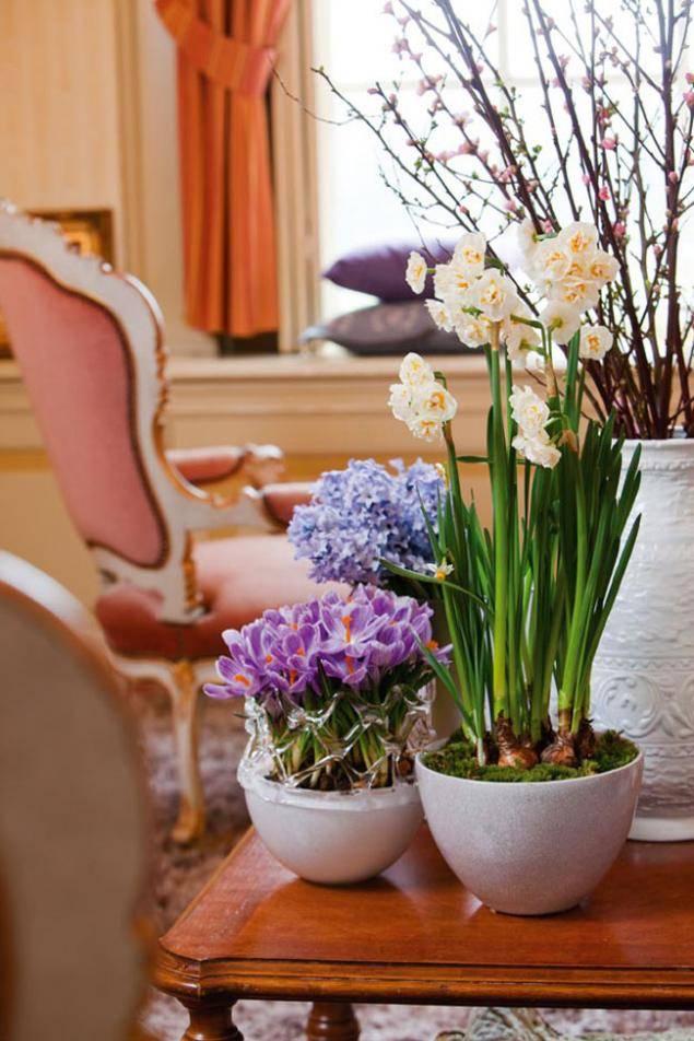 Самые популярные цветы для дома: фотоподборка