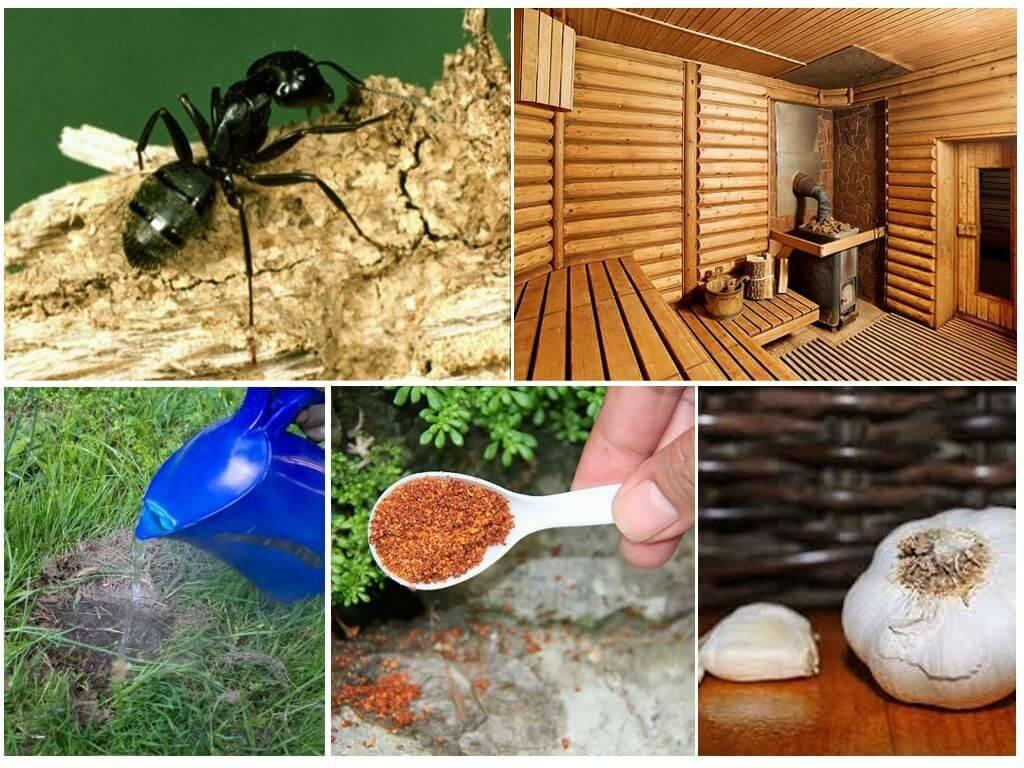 Как избавиться от муравьёв в бане: лучшие способы