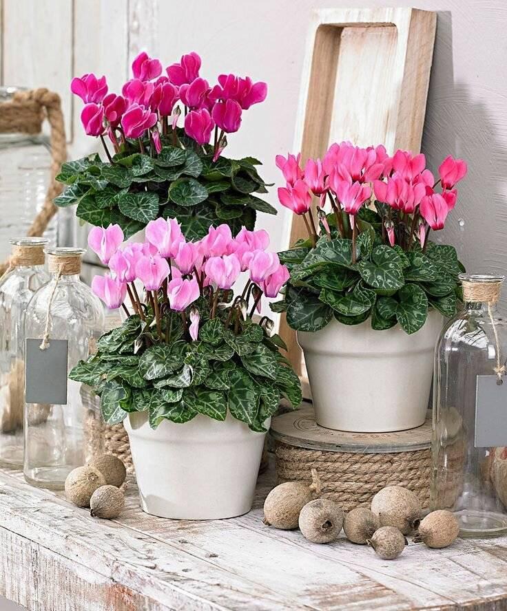 Самые популярные цветы: 10 наиболее часто встречающихся у цветоводов россии растений в горшках