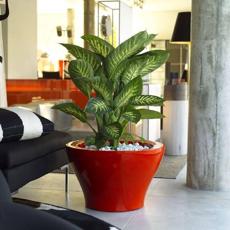 Теневыносливые комнатные растения: фото и названия