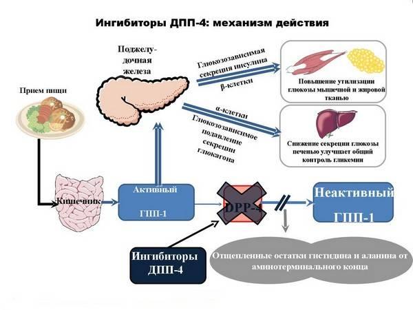Мед при диабете: можно или нет, совместимость   компетентно о здоровье на ilive