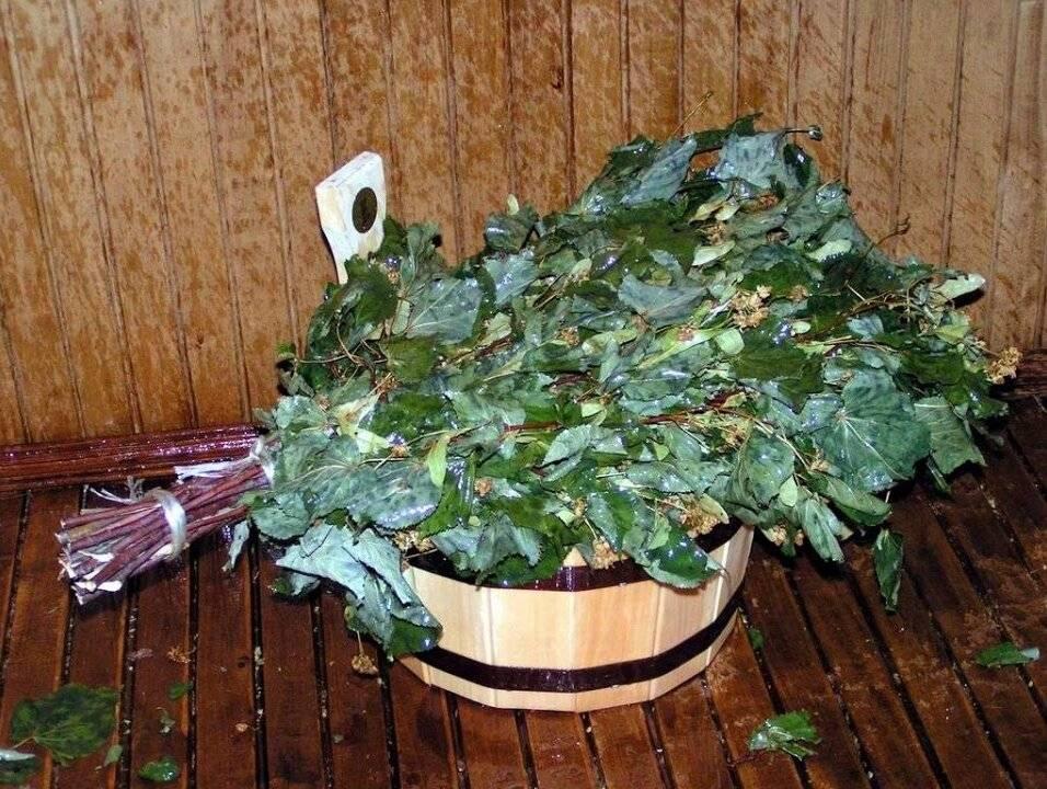 Свежий веник для бани: как запарить, польза свежего веника, его достоинства и удобства использования