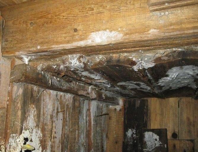 Обработка древесины от грибка и плесени: 7 способов | строительство. деревянные и др. материалы