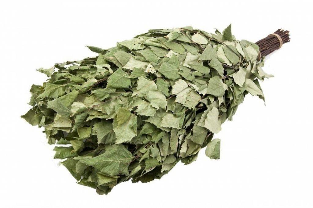 Липовые веники для бани: польза и вред. как правильно запаривать веники из липы? как их хранить и использовать?