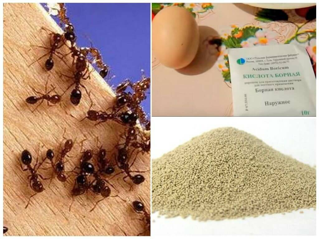 Как избавиться от муравьев в деревянной бане: лучшие методики