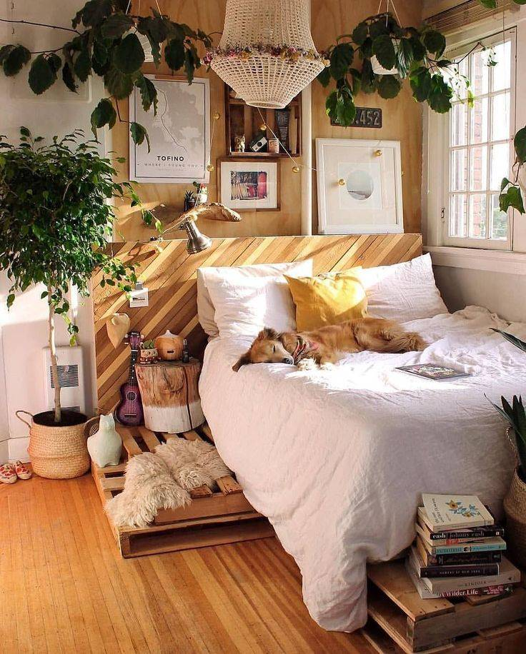 Правила и способы размещения комнатных растений в интерьере. цветы в спальне