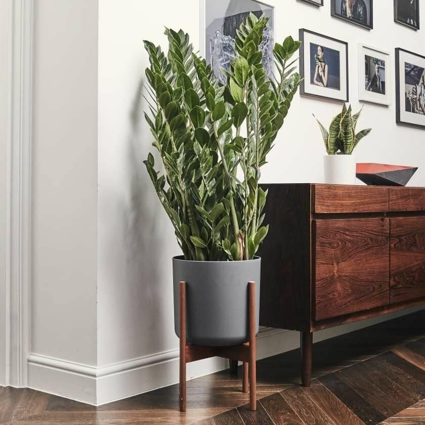 Какие комнатные растения в доме самые неприхотливые и красивые