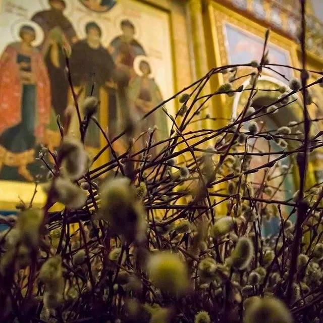 Какую вербу нельзя нести домой 25 апреля, чтобы беду не накликать? приметы в вербное воскресение